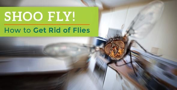 Shoo Fly! How to Get Rid of Flies