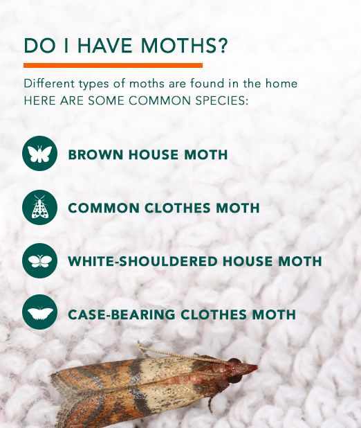 how do you get rid of moths in closet Roselawnlutheran