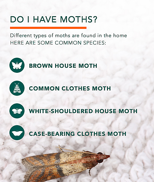 Clothes moths facts how to get rid of moths for How long did it take to build the white house