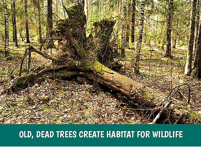 Leave a stump or fallen tree to become a habitat for wildlife