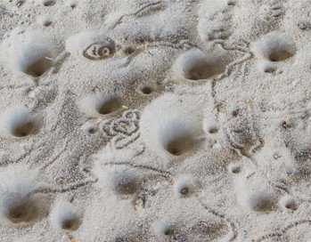 Antlion Holes in the Sand