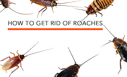Now That Youu0027ve Identified Roaches And Understand The Danger Of An  Infestation, Itu0027s Time To Get Rid Of Them. Before Reaching For A Spray Can  Of Pesticides, ...