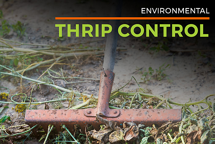 Environmental Thrip Control
