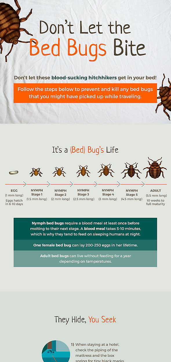 Bed Bug Lifecycle, Part 1