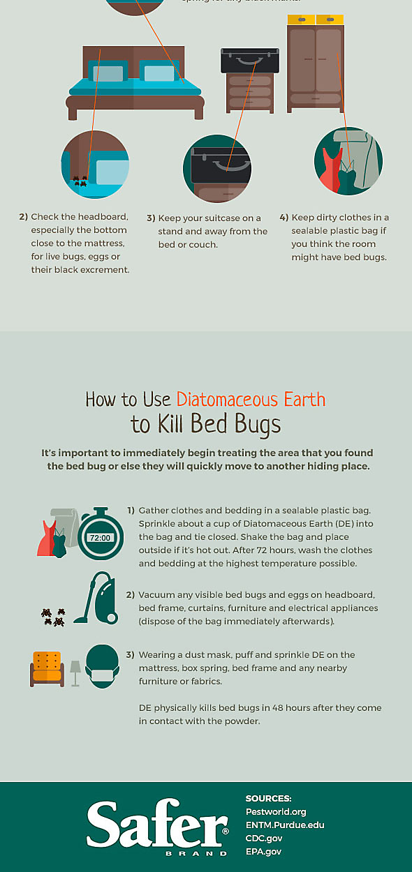 The Bed Bug Life Cycle And How To Get Rid Of Them