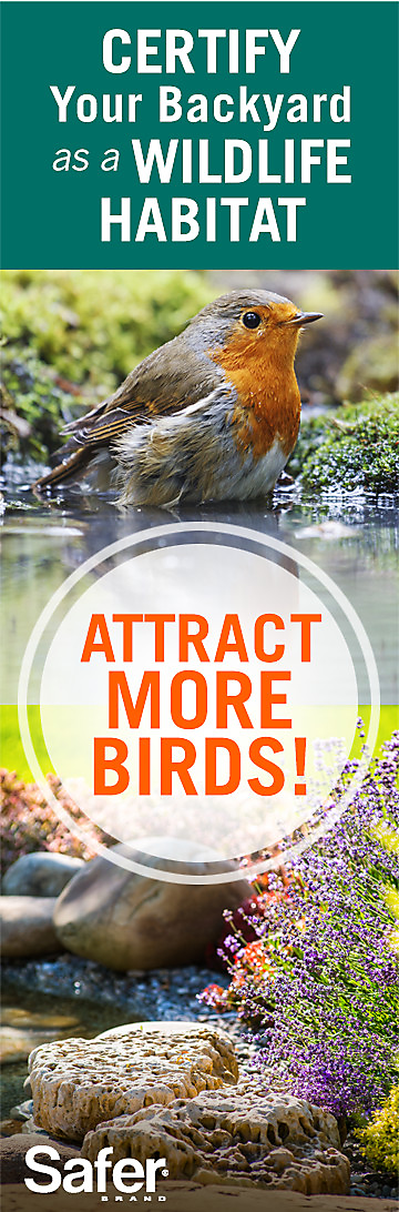 attract birds to garden certified wildlife habitat