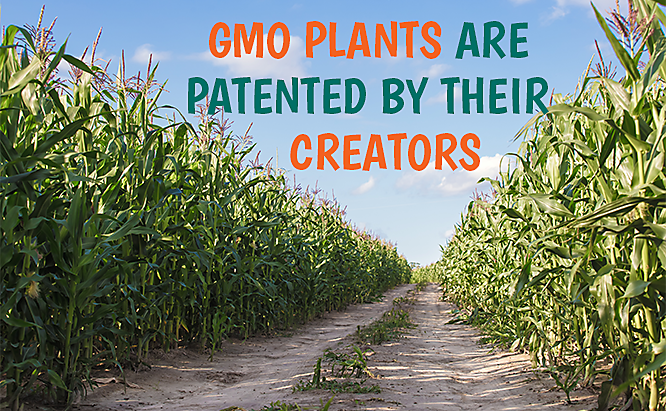 who owns gmos