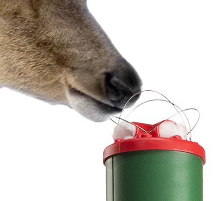 A deer sniffing at the bait in a Havahart Electronic Deer Repellent Stake