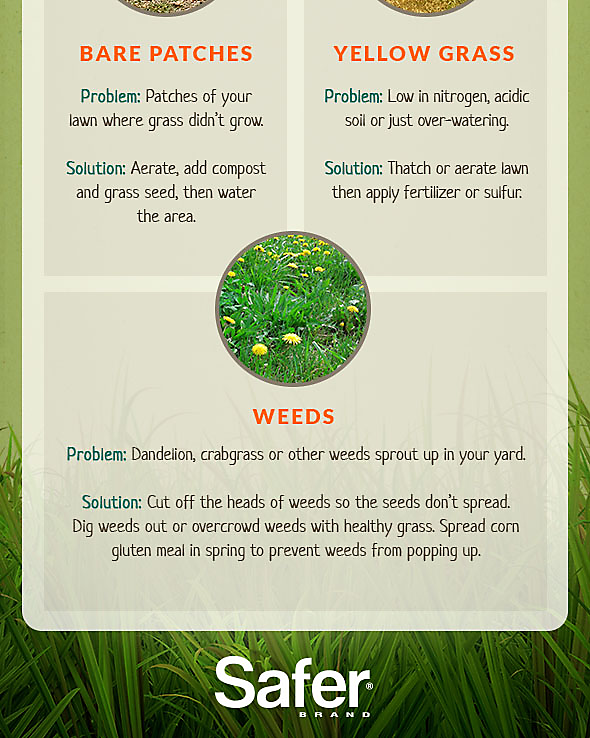 Organic Lawn Care, Part 3