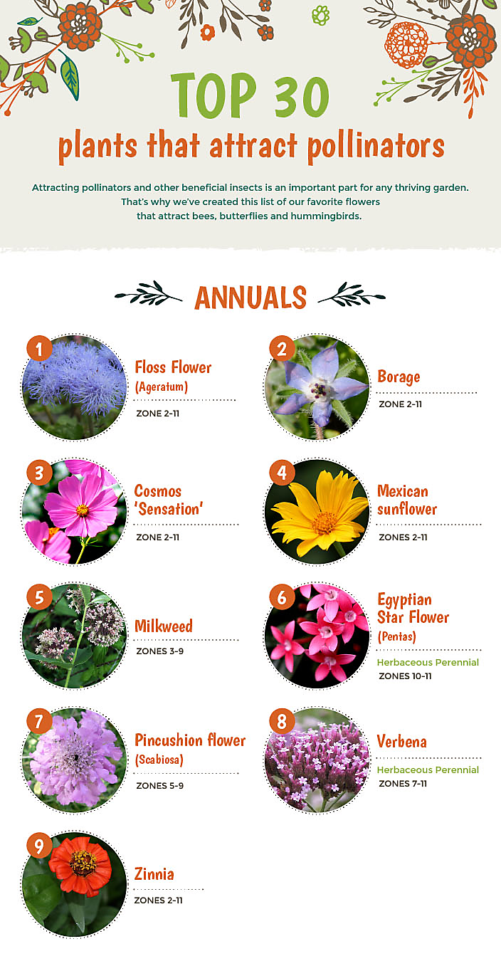 Top 30 plants that attract pollinators top polinators part 1 mightylinksfo