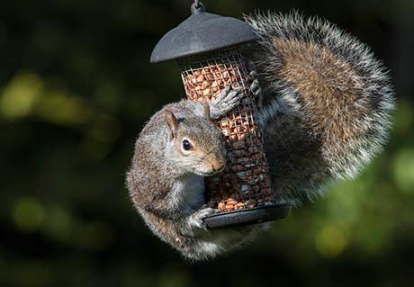 A squirrel climbing on a bird feeder