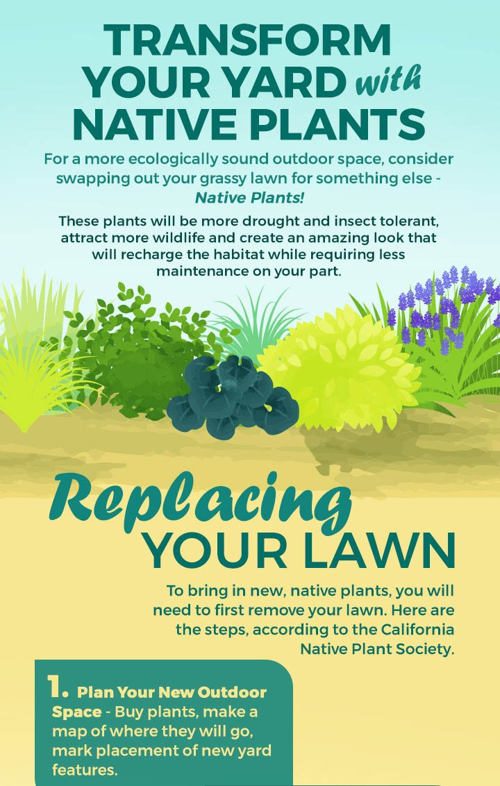 Safer Brands, Transform Your Lawn with Native Plants, 1