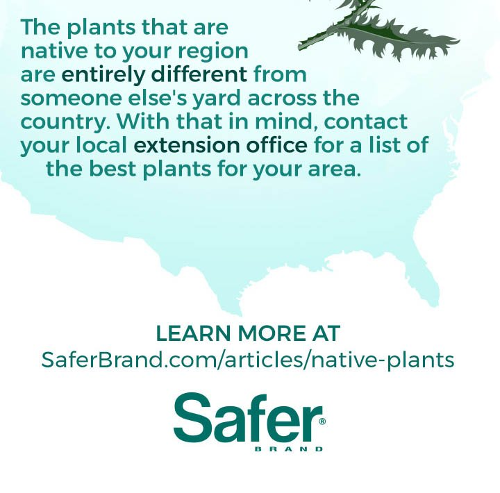 Safer Brands, Transform Your Lawn with Native Plants, 4