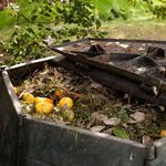 7 Reasons to Compost