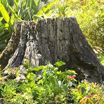 Stump Options in your Yard