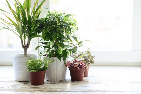 Protect Your Houseplants with Sticky Stakes