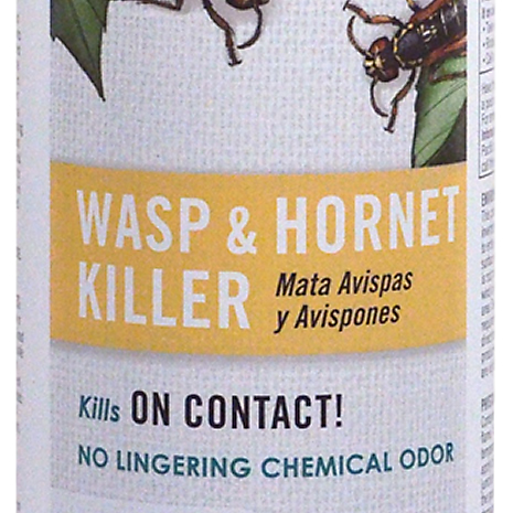 wasp and hornet killer closeup