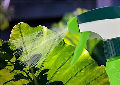 How to Use Garden Spray