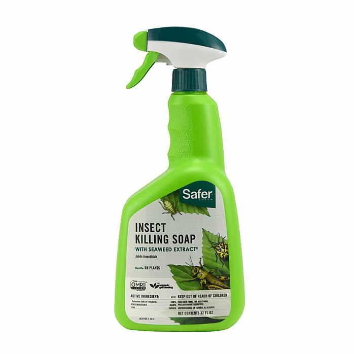 Outdoor Fly Control & Killer | Organic Fly Trap Products