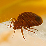 Fight Bed Bugs