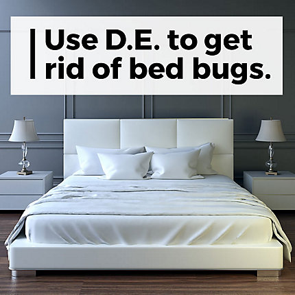 Diatomaceous Earth | Bed Bugs, Fleas, Ants & Other Crawling