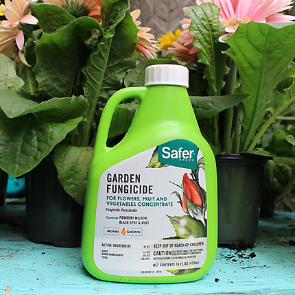 Safer® Brand Garden Fungicide Concentrate 16oz