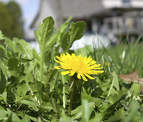 Existing Weeds