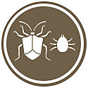 Kill insects and mites