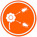 Repel Insect Pests