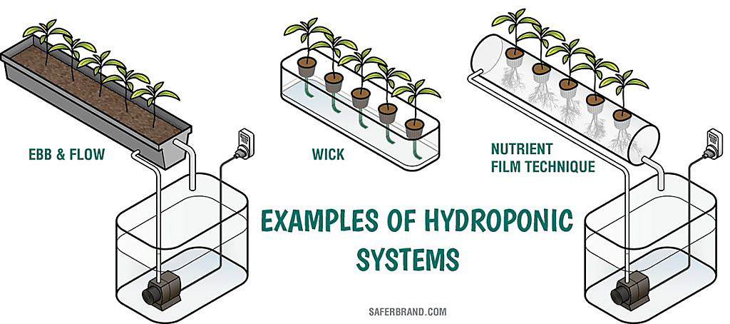 Hydroponic System Examples