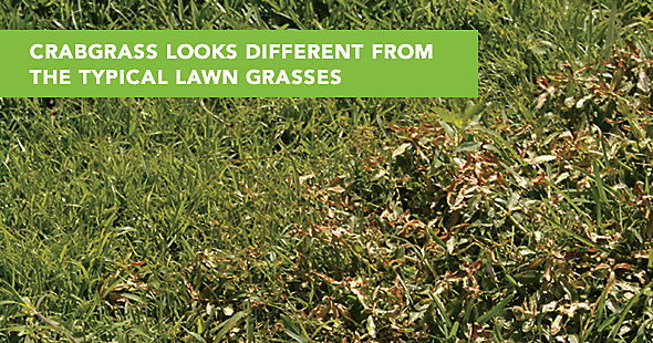 how to get rid of straw grass