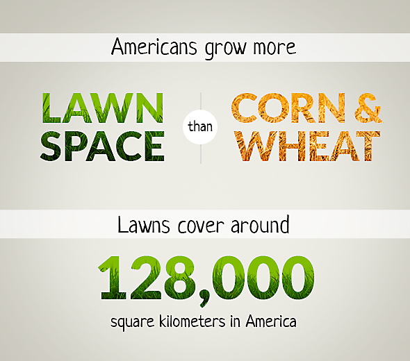 Americans grow more lawn space than corn or wheat