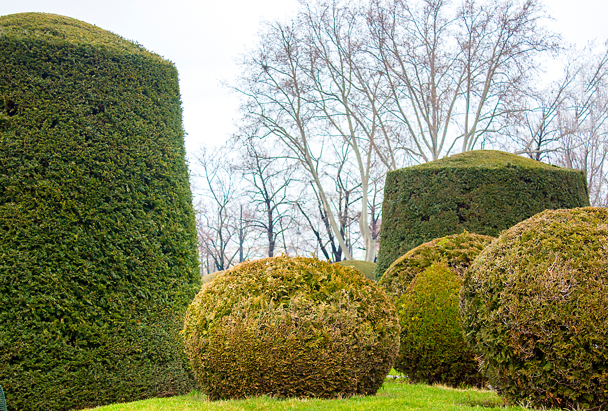 Careful planning and attention to detail can give your shrubs a formal, sculpted appearance.