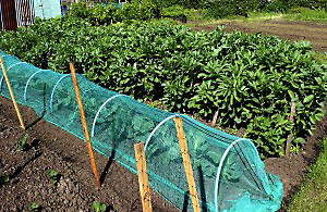 Special covers can be added to row crops that protect them from cold weather.
