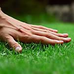 20 Lawn Pests