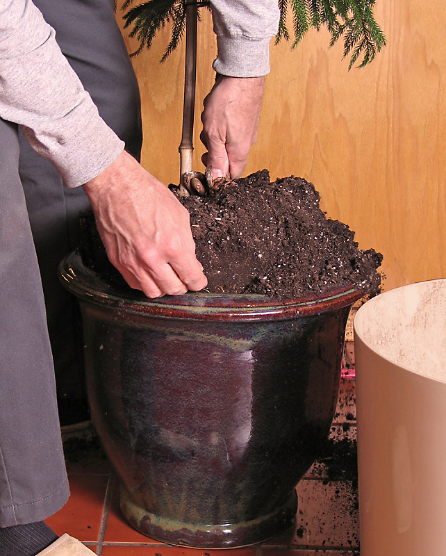 Avoid repotting a houseplant until it's about to begin spring growth