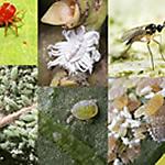 Indoor Garden Pests