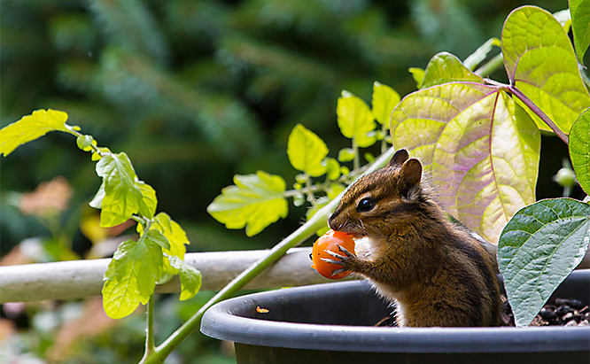 sb_us_kids_chipmunk_shutterstock_450857209