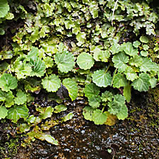 liverwort and rock