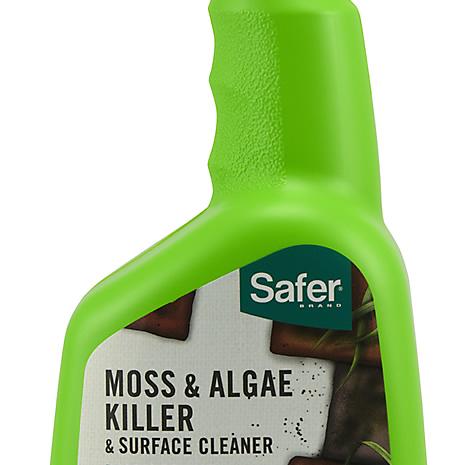 moss and algae