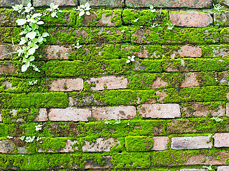 brick wall with moss