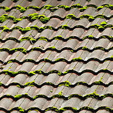 moss on roof tile