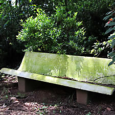 moss on bench
