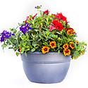 Growing Flowers