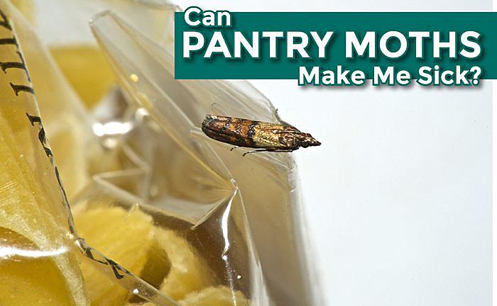 Can Pantry Moths Make Me Sick?