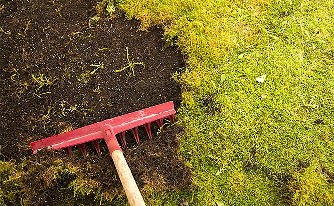 Rake moss patches out of your lawn and reseed these areas with grass. Be aware that most moss grows in areas with a lot of shade so your grass may not take.