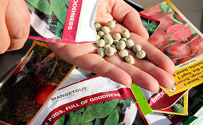 Select your seed packets in the late winter or early spring to prepare them for planting.