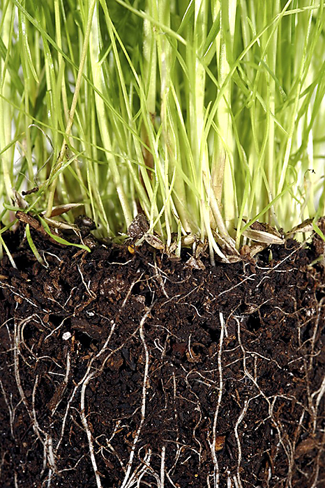 By encouraging a variety of soil organisms under your lawn, you'll have healthier and greener grass.
