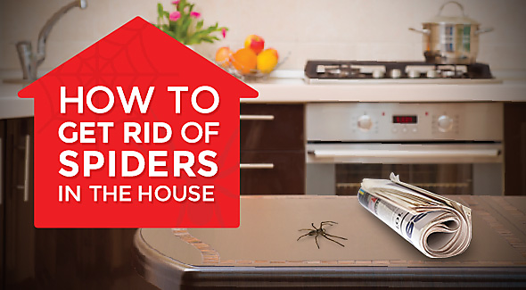 How to get rid of spiders in the house for How to get rid of spiders in house