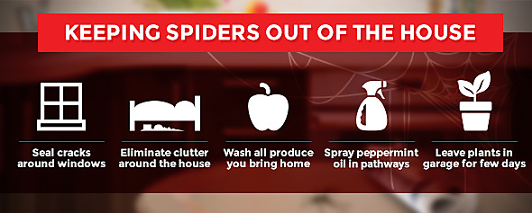 how to get rid of spiders in the house